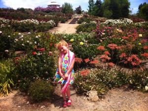rose haven 8